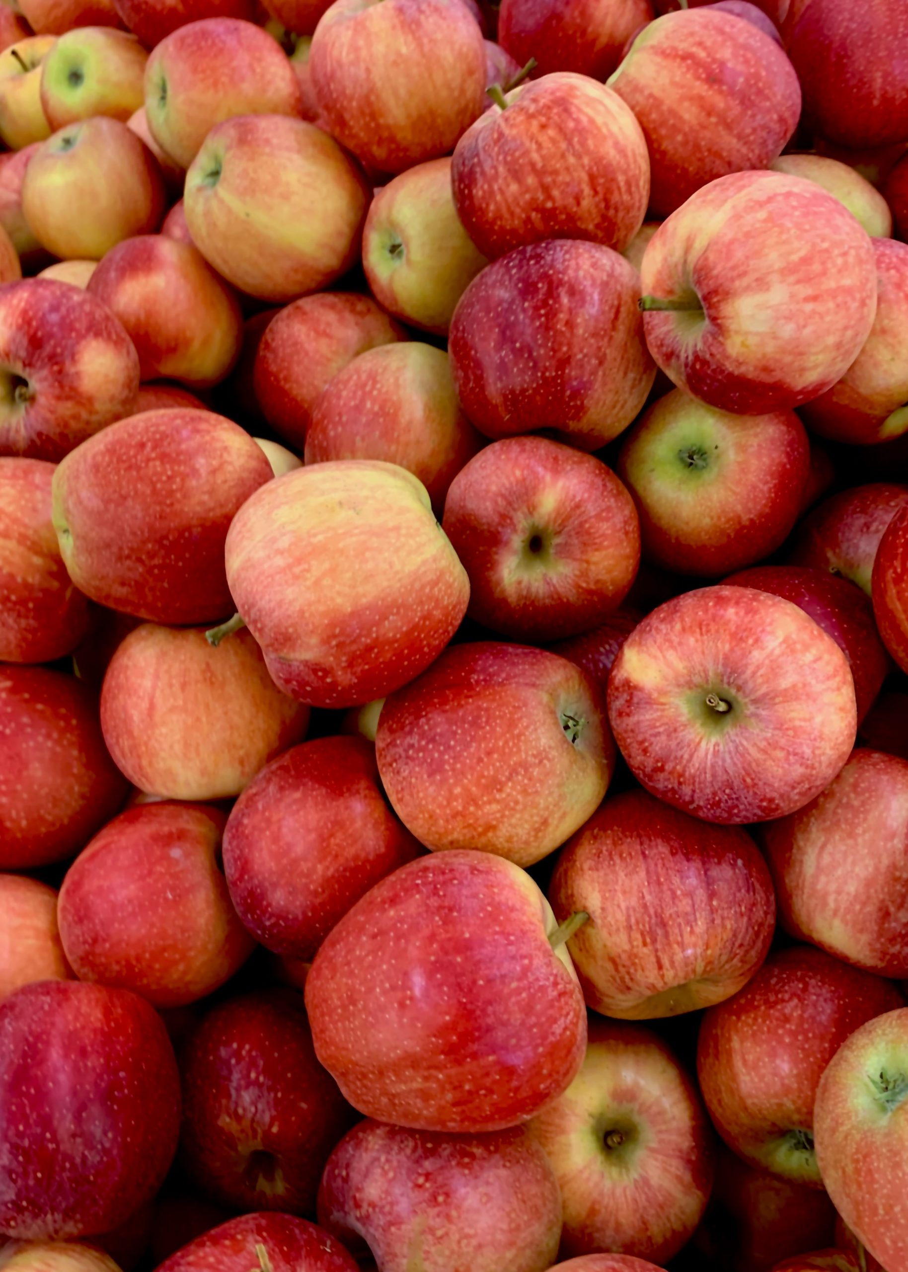 Apfel Einkochen Rezept