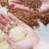 Kann Reis schlecht werden?