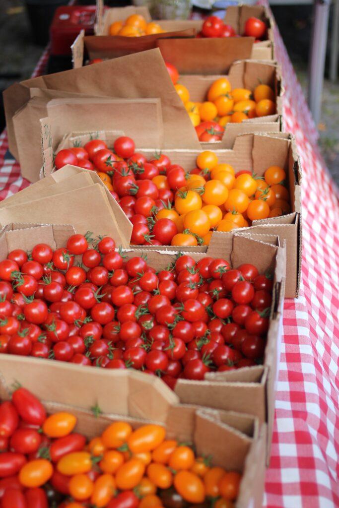 Wann blühen Tomaten?