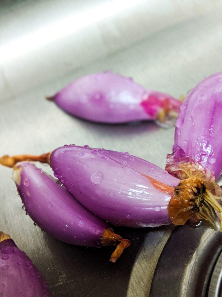 Können Zwiebeln schlecht werden?
